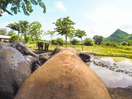 Visit this Elephant Sanctuary in Thailand (ElephantsWorld)