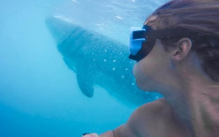 Things to know about swimming with Whale Sharks in The Philippines