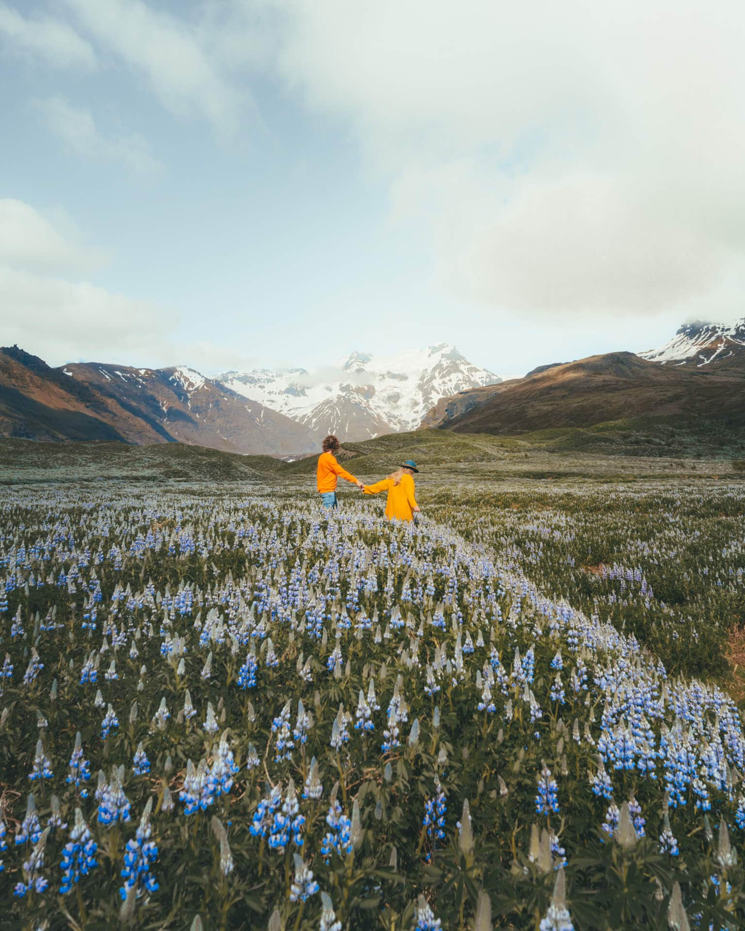 iceland packing list flower field lupine