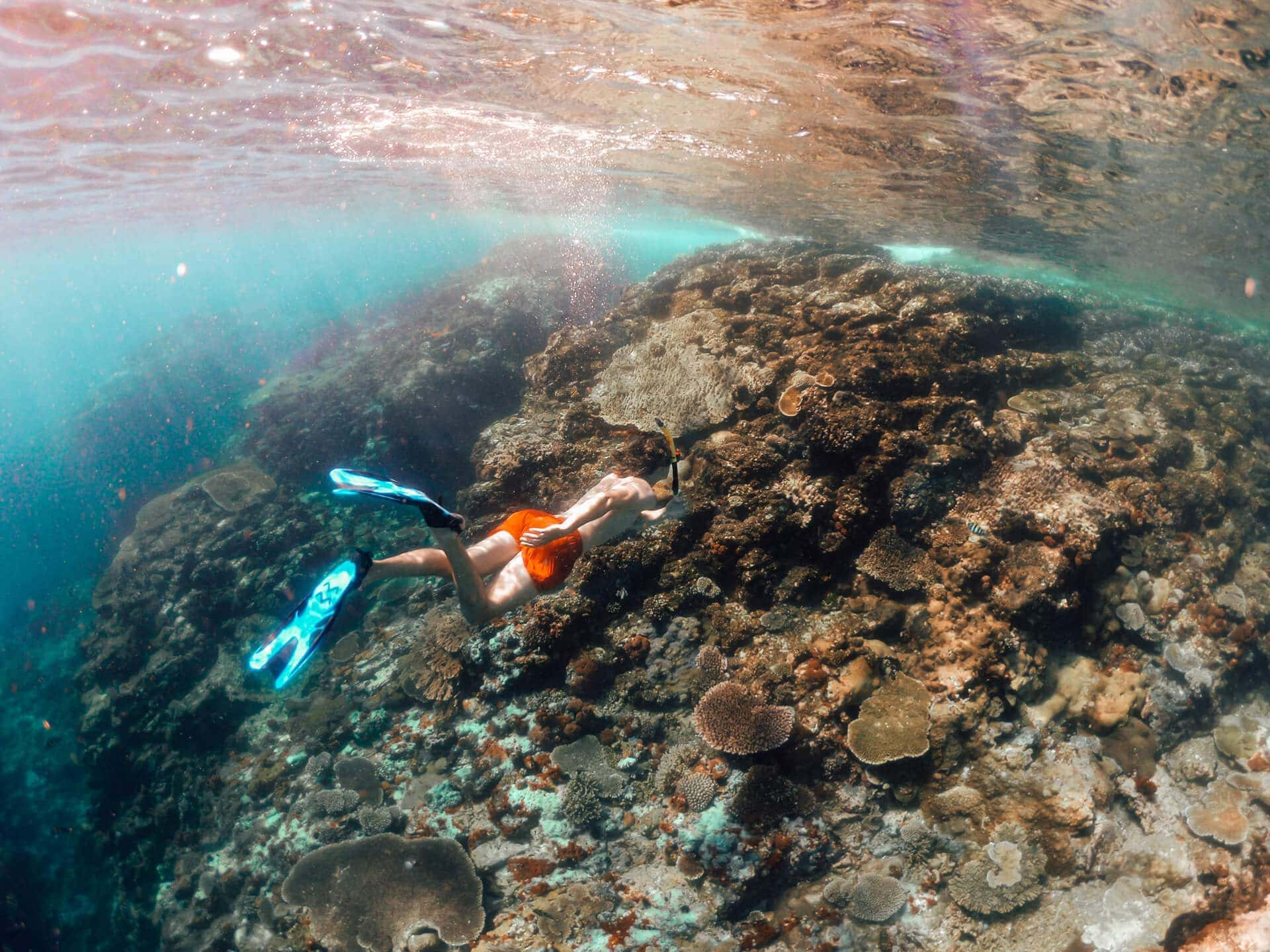 komodo islands flores snorkeling