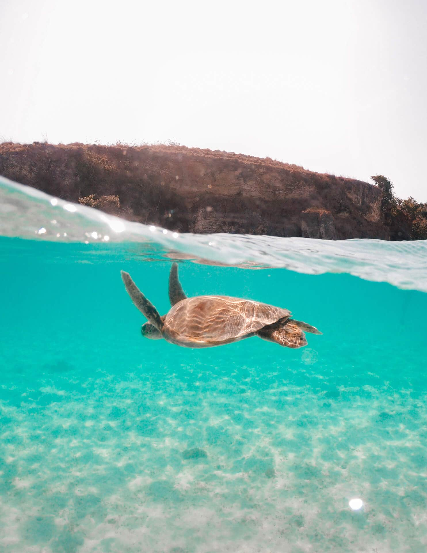komodo islands flores turtle