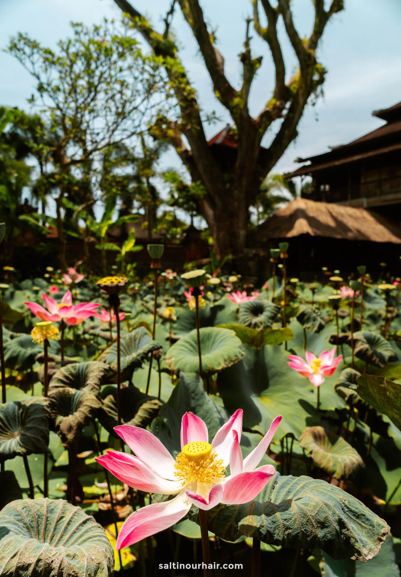 things to do ubud Saraswati Temple flower