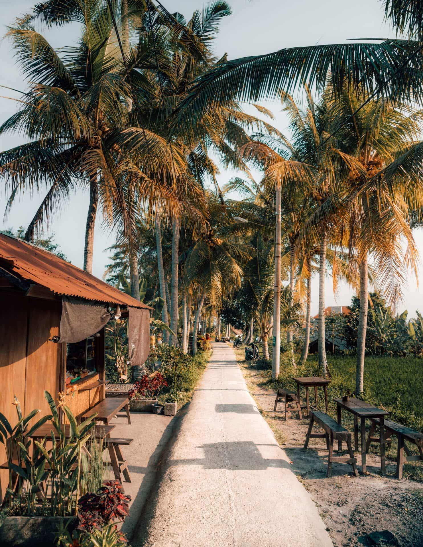 things to do ubud ricefields walk