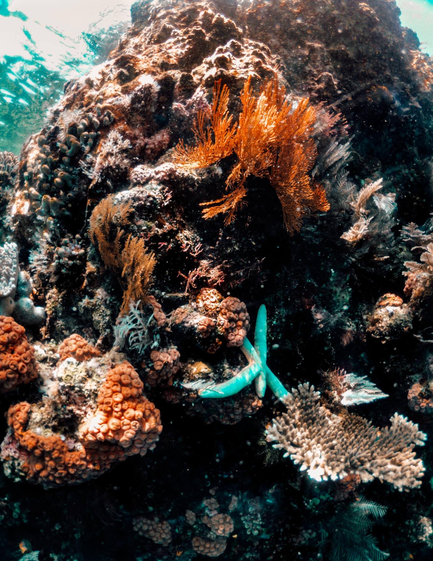 things to do komodo flores snorkeling batu bolong