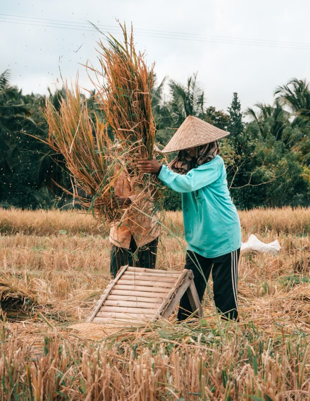 bali stay with locals rice farm
