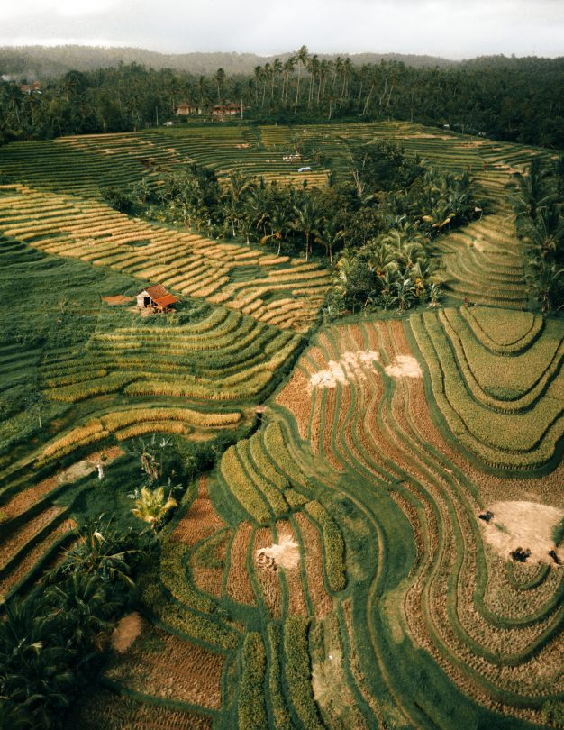 bali stay with locals rice field