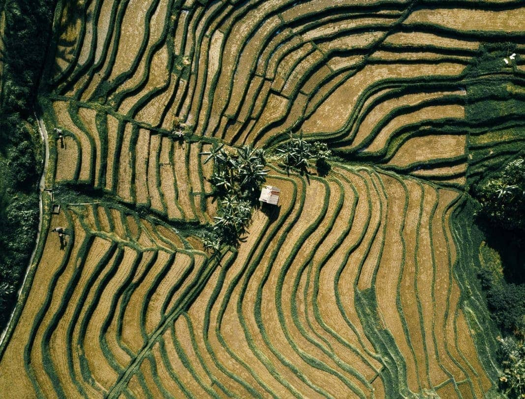bali stay with locals rice terrace