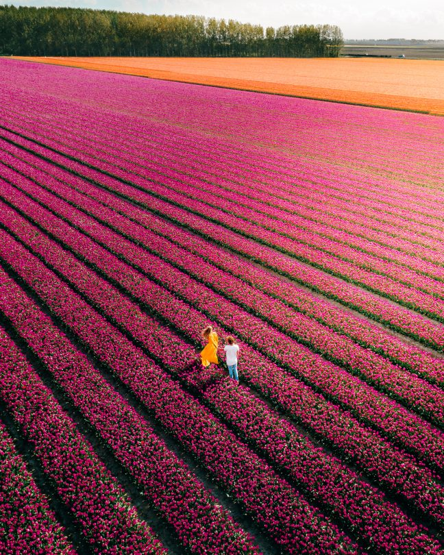 travel photography camera Salt in our hair tulips drone