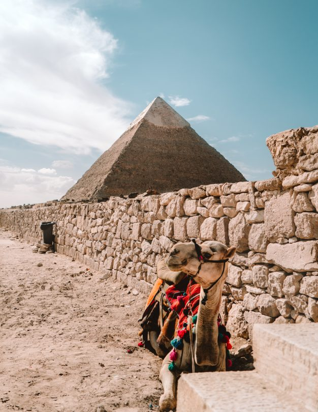 Pyramids and Sphinx of Giza camel