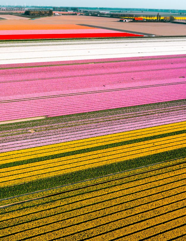 best tulip fields holland